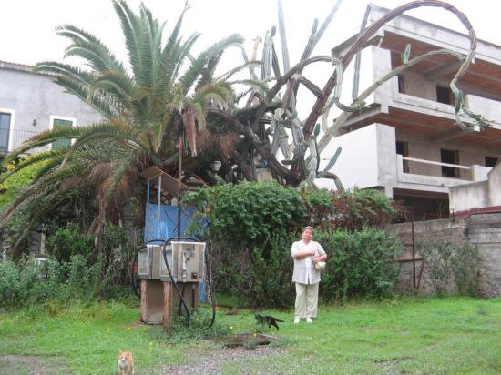 Кактус с трех этажный дом! но местные удивлялись - мол чего они в нем нашли)