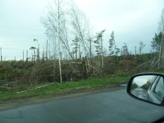 здесь был эпицентр урагана, который был в Нижнем летом 2010 года. Участок леса в 100 метров, до него и после густой лес.