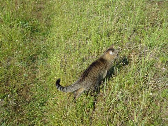 Нас встретила местная хозяйка-кошка Феня