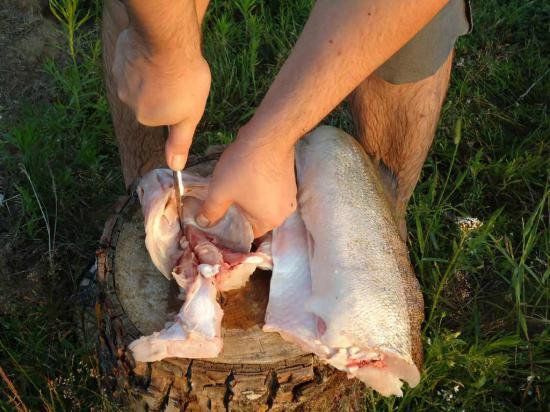 """Некоторые опытные рыбаки утверждают, что на Керженце много """"щучьих мест"""", но в этот раз щук мы не поймали. Пришлось довольствоваться судаком."""