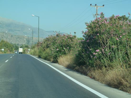 часто вдоль дорог растут цветущие деревья и кусты