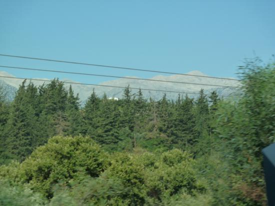 лес, как в нижегородской области