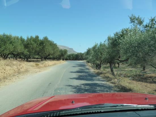посадки оливковых деревьев, до грунтовки недалеко