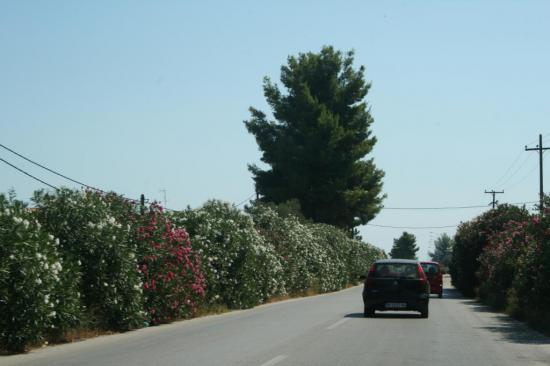 Красивейший вид! Вся дорога в цветах.